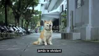 La historia de un perrito que hizo llorar al mundo entero (Imposible no llorar)