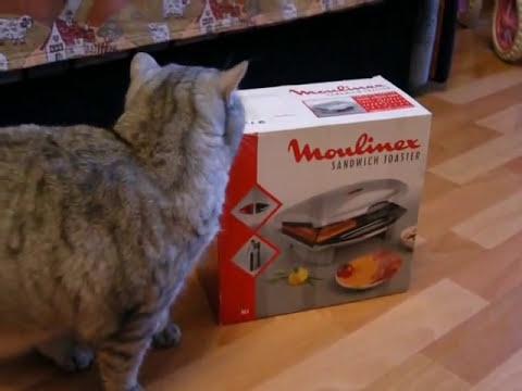 Кошка Дуся и день забот