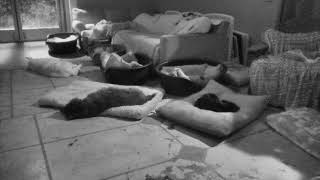 Senior Dog Gathering Room Cam 02-21-2018 00:59:01 - 01:59:02