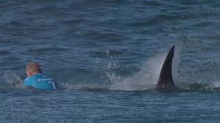 Hai Angriff Vor Laufender Kamera