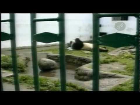 #19 Oso Panda Ataca a Turista - Los Encuentros con Animales Más Tontos del Mundo