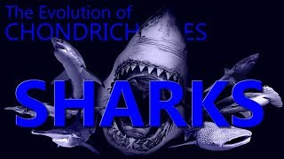 Evolution of Chondrichthyes II : Sharks