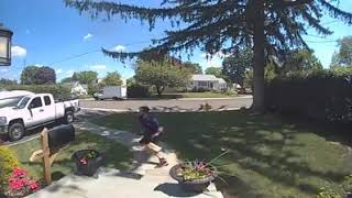 Just Leave the Package and Run - Funny Dog Video Caught on Camera