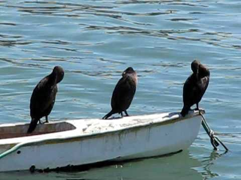 Birds in Luderitz, Namibia
