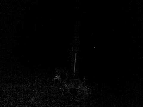 deer feeding out of homemade feeder
