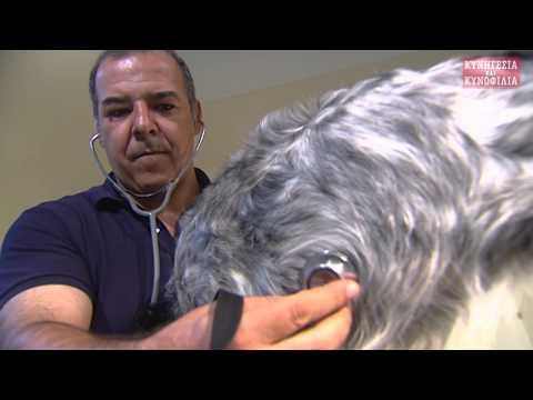 Γιώργος Ρόζος: καλααζάρ-μύθοι και πραγματικότητα