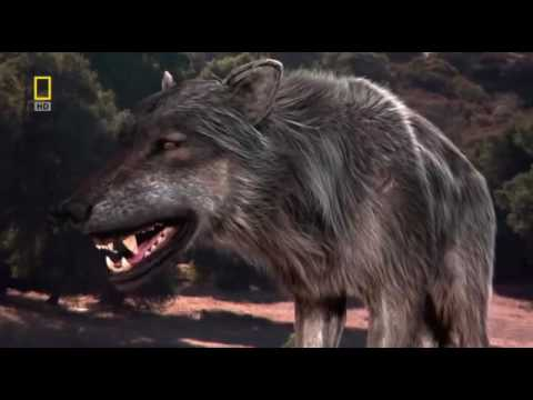 Доисторические хищники — Древний Страшный Волк. Документальный фильм HD