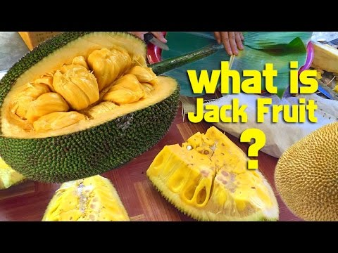 All about JACK FRUIT in Thailand