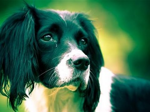 How To Take Great Pet Photographs