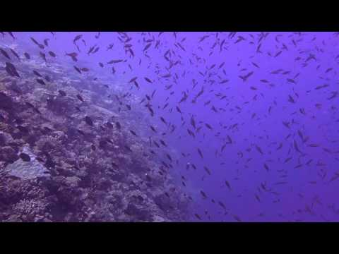 Fusiliers and Surgeonfish Chagos MPA