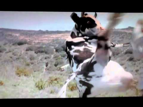 kung pow enter the fist movie mp4 download