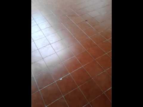 Colegio Preparatorio de Xalapa Vespertino
