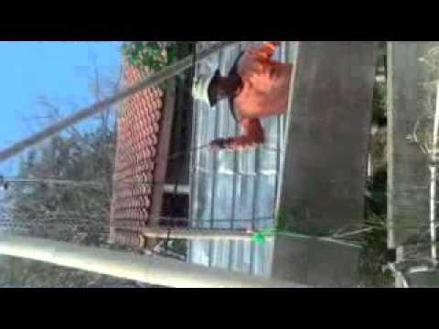 cara bongkar pasang pagar panel beton precast