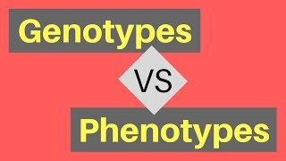 Genotype vs Phenotype | Understanding Alleles