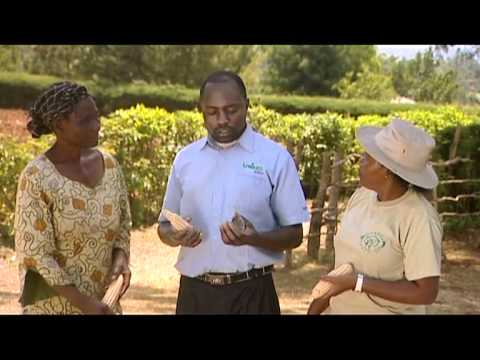 Series 1-Episode 8 [Tomatoes, Irrigation, Maize], Scene 4
