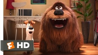 The Secret Life of Pets - The Owners Return Scene (10/10) | Movieclips