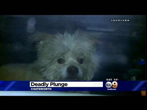 2 Killed, Dog Survives When Car Plunges Off 118 Freeway In Chatsworth