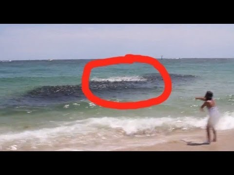 Mysterious Sea Creatures CAUGHT ON CAMERA