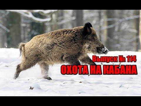 Охота на кабана, выпуск №114 (UKR)