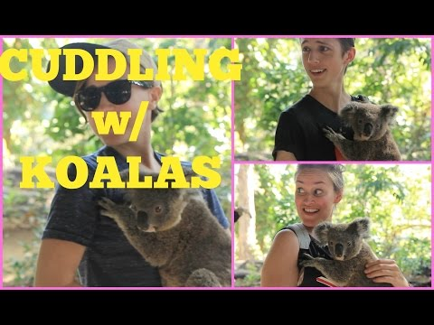 Hello Harto: Cuddling With Koalas    Attacked By Snakes video