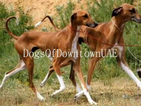 Mating Animal S.e.x. Fail - الحيوانات الجنس Girl & Her Dog At The Kennel Club video