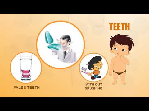 Learn about Human Body Parts For Kids - TEETH