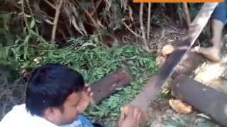 sandalwood cutting (chandan ni kapni)  AJAYPATEL CALL:- 9909179557