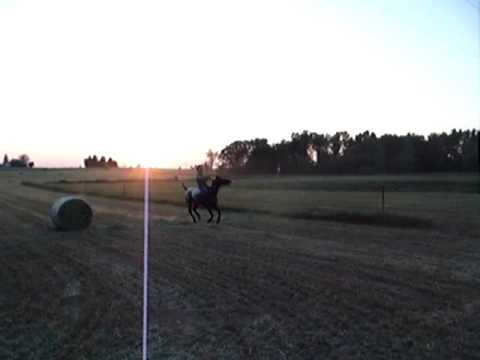 Another short video of what a boy and his horse can do!