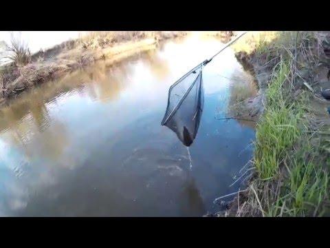 как ловить ротана весной видео