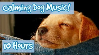 How to Relax Your Dog! Calm Dogs and Puppies Down with Soothing Music to Relieve Anxiety and Stress!