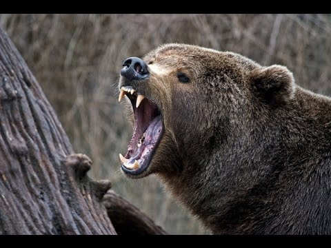 Lov na Medveda 2014 mpeg2video