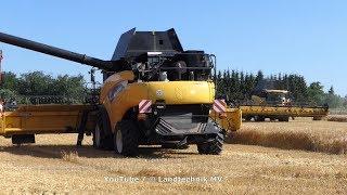 New Holland CR9090-++ / Getreidernte - Grain Harvest  2019