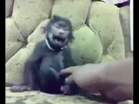 สุดฮา กับลิงหัวเราะได้