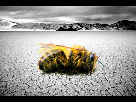 Disappearing Bees and the Coming World Famine