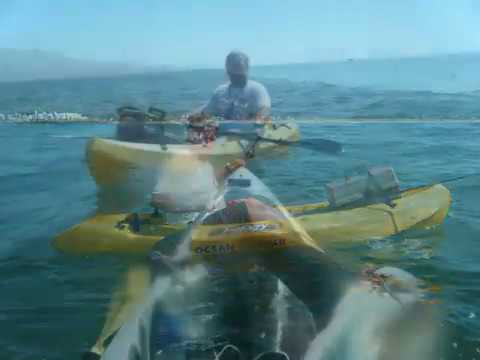 Extreme Kayak Thresher Shark Fishing in California