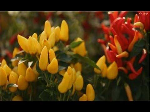 Garden Landscape - Top Five Fall Flowers