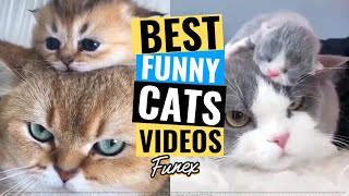 How Interesting Is It To Have A Cat  #14 😻 Best Funny Cats Videos 2020