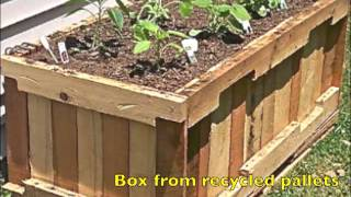 GROWING PLANTS IN BOXES