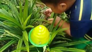 Đồ chơi trẻ em bé pin bắt con ốc sên ❤ PinPin TV ❤ Baby toys catch snail