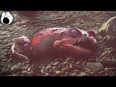 10 Most MYSTERIOUS Unidentified Creatures