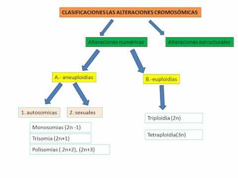 Alteraciones Cromosomicas Alteraciones Cromosomicas
