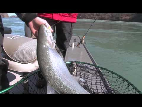 Niagara River Steelhead Fishing
