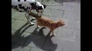 Rabe und Hund ärgern Katze