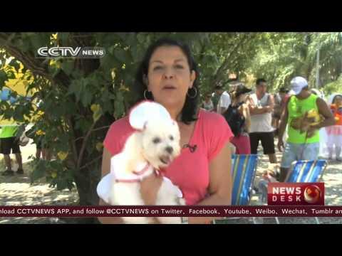 Dogs partying at Rio de Janeiro carnival