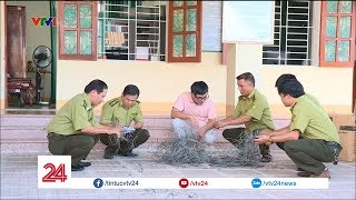Hà Tĩnh: Phát hiện hàng trăm bẫy thú rừng | VTV24