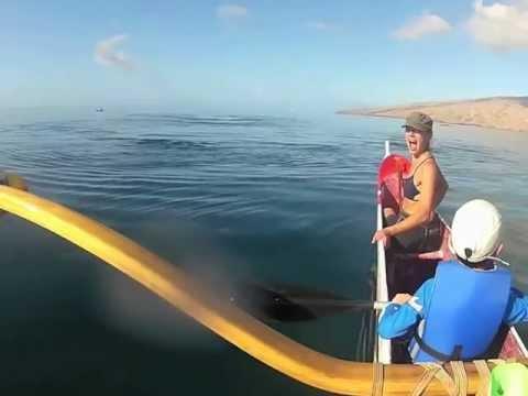 Maui Outrigger Canoe Paddle  - Humpback Whales Triple Breach!