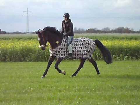 Pferd Reiten Ohne Sattel Und Ohne Sattel Reiten