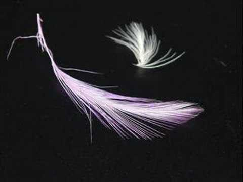 Toss The Feathers by The Corrs tab