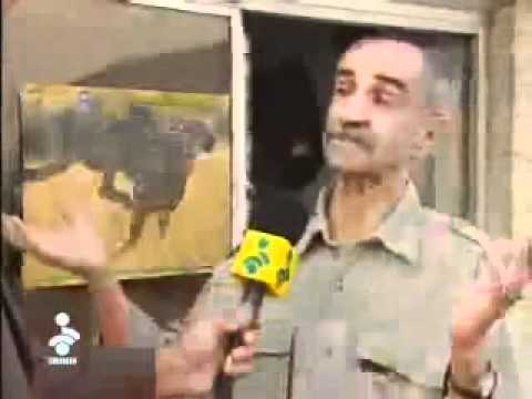 asiatic cheetah conservation day.mp4