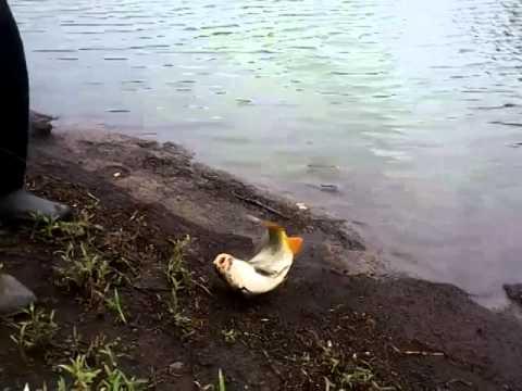 нет платной рыбалке в татарстане